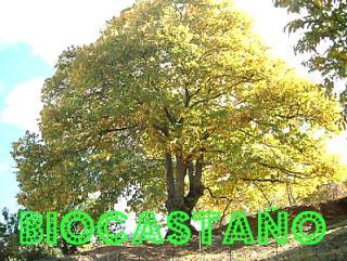 Biocastaño