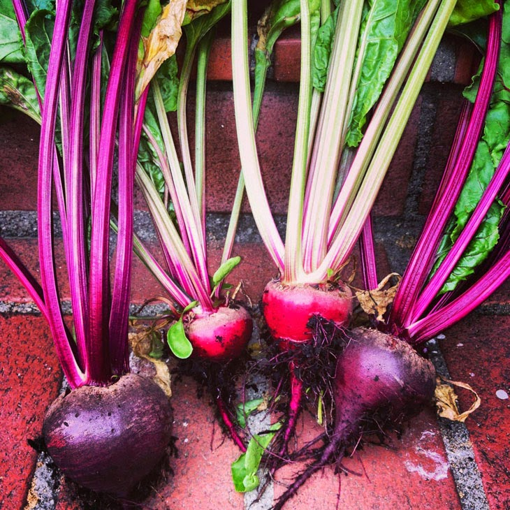 He Started With Some Boxes, 60 Days Later, The Neighbors Could Not Believe What He Built - Beautiful beets brought some color.