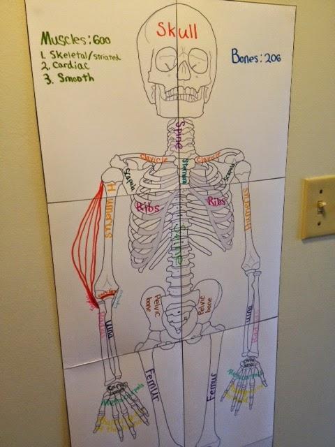 Swinging Monkey Flying Pig Skeletal Muscular Systems