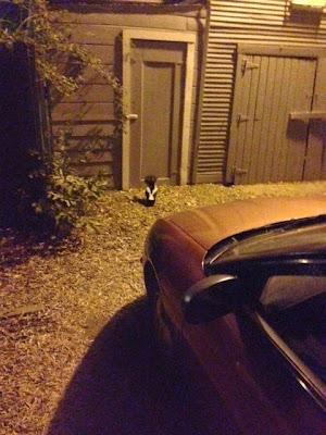 Late Night Skunk