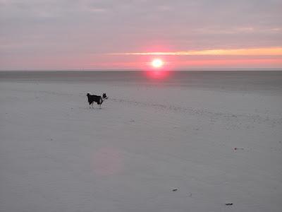 St. Peter-Ording Winterstimmung am Ordinger Strand mit Hund