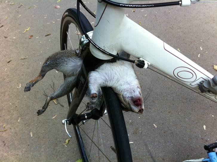 Something Bike seat dildo gif that