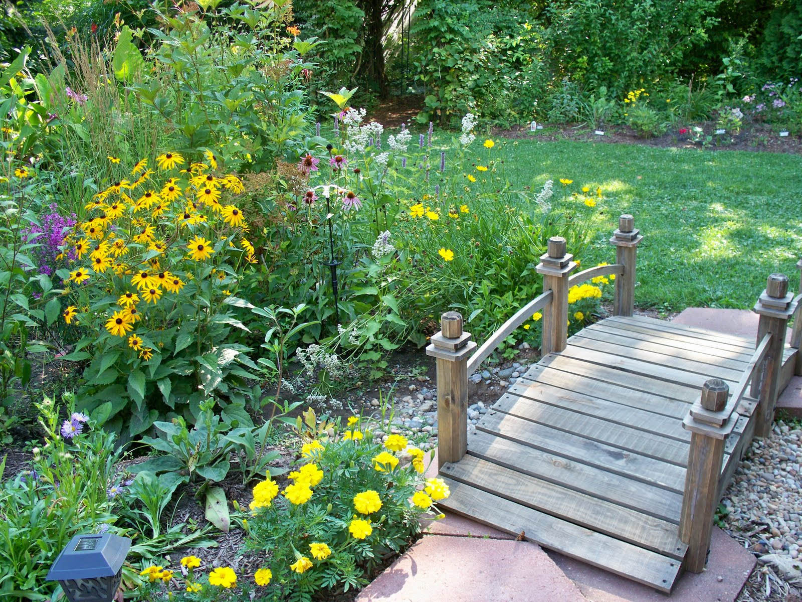 Garden Beauty: Beauty in a Rain Garden