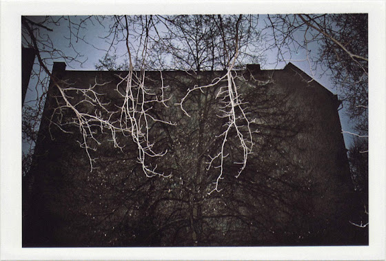 dirty photos - umbra - a night street photo of a tree and building in berlin
