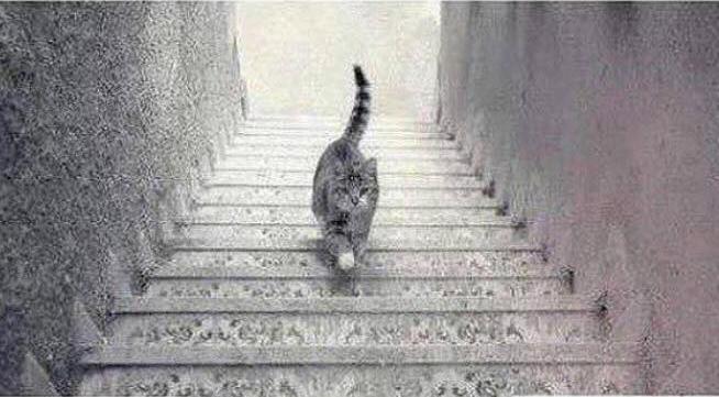 Kucing ini ada akan ke tingkat atas atau ke tingkat bawah