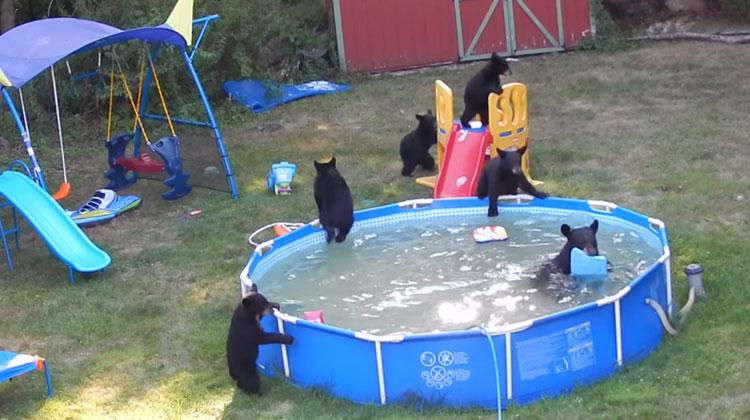 Los ingredientes de la vida familia de osos se ba an en for Imagenes de piscinas en casa