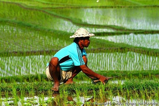 Pengertian Ilmu Pertanian Dan 4 Bentuk Pertanian Di Indonesia Anak