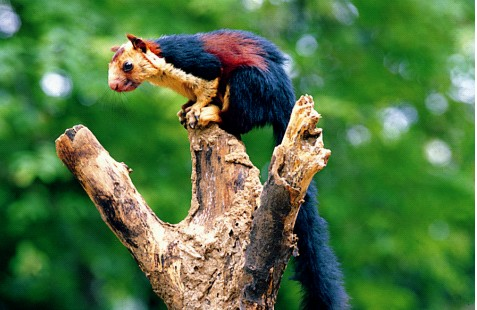 kerala-wildlife