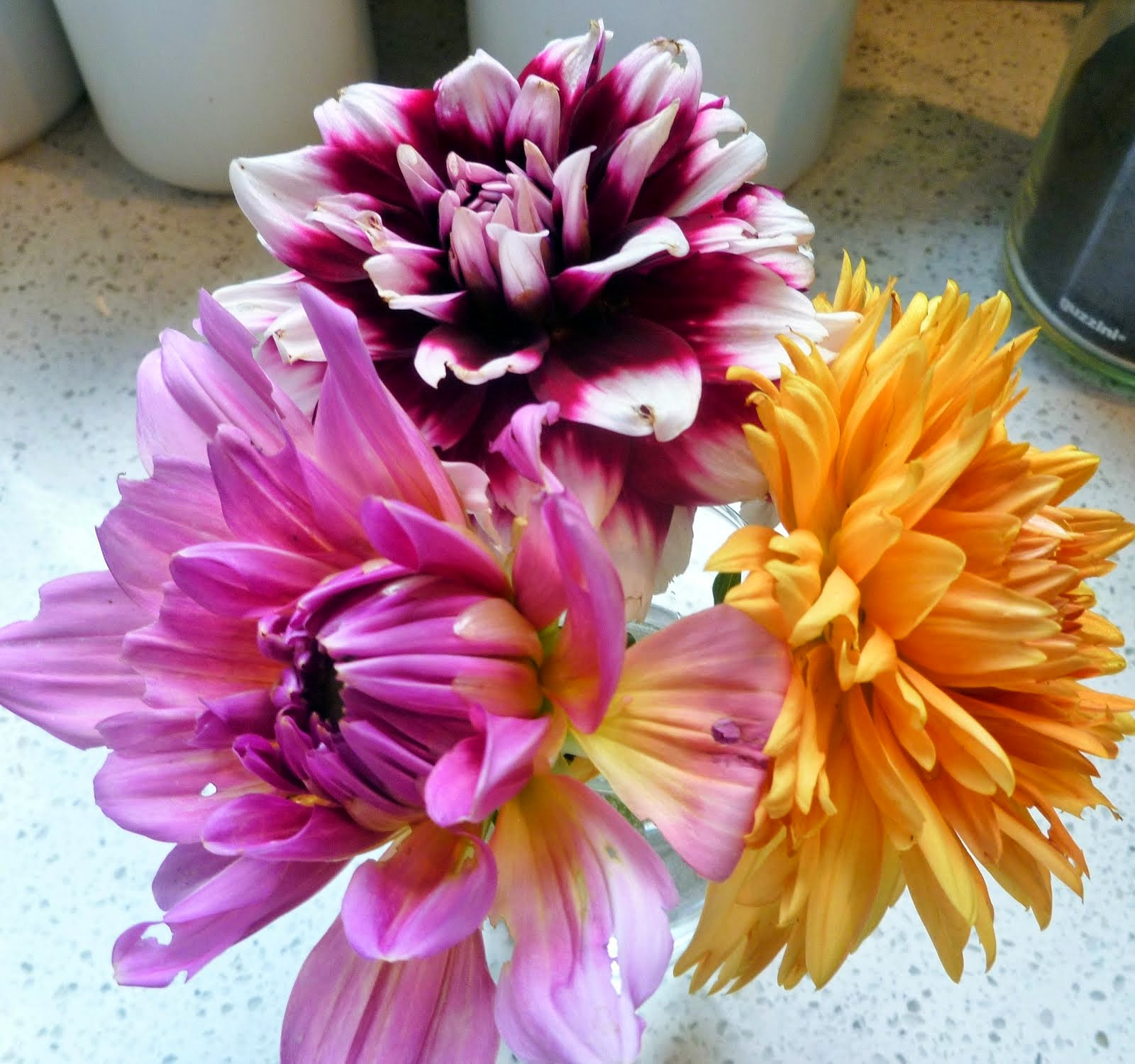 Dahlias In July