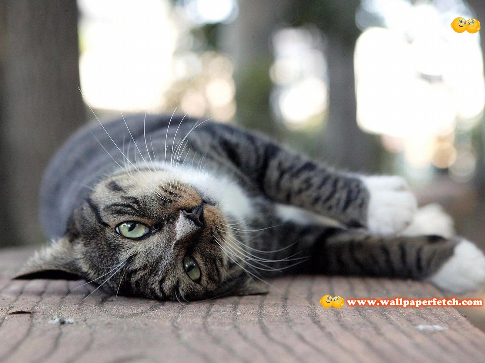 http://1.bp.blogspot.com/-LTKck4Y0jaU/TyFWZ-BKXCI/AAAAAAAAE28/mQo1QyVzews/s1600/SuperPack_Beautiful_Animals_HD_Wallpapers_Part_32.44.jpg