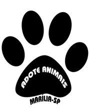 ADOTE ANIMAIS EM MARÍLIA/SP
