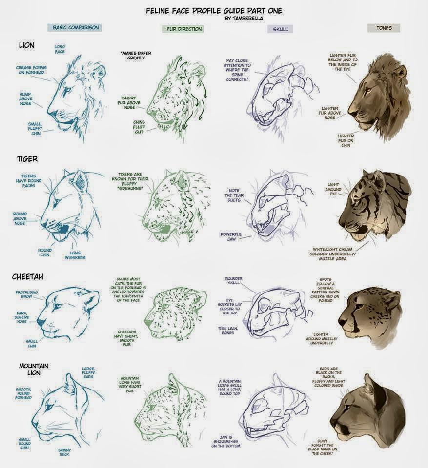 ubaiacatuba guia de como desenhar felinos