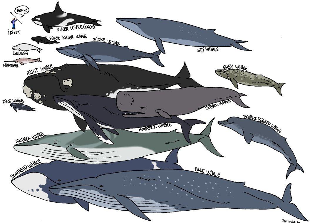 Aeysthetics: Whale Types