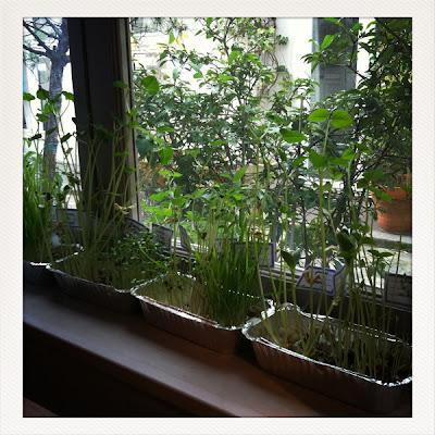 isabelle kessedjian un jardin dans la maison. Black Bedroom Furniture Sets. Home Design Ideas