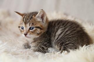 katt ålder i människoår