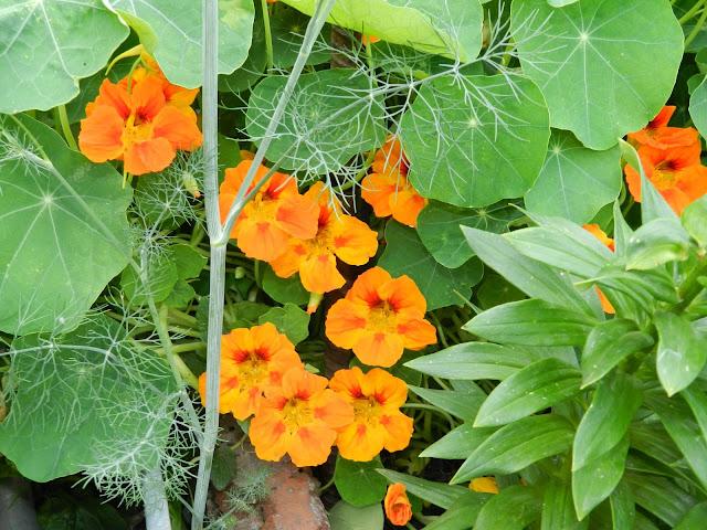 Блог самые красивые садовые цветы
