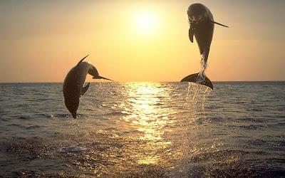 ảnh đẹp cá heo, hình ảnh cá heo, cá heo đẹp, cá heo đẹp,