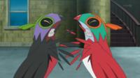 Pokemon XY - Capitulo 51 - ¡Hawlucha y el Hawlucha oscuro!