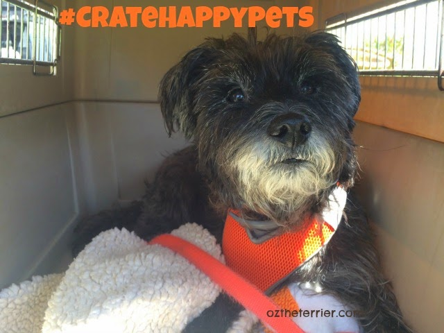Oz the Terrier | Benefits of Crate Training a Dog