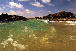 Diplomado en gestión e innovación de la conservación marina costera