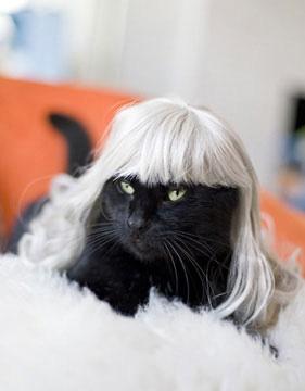 imagenes de gatos creativos