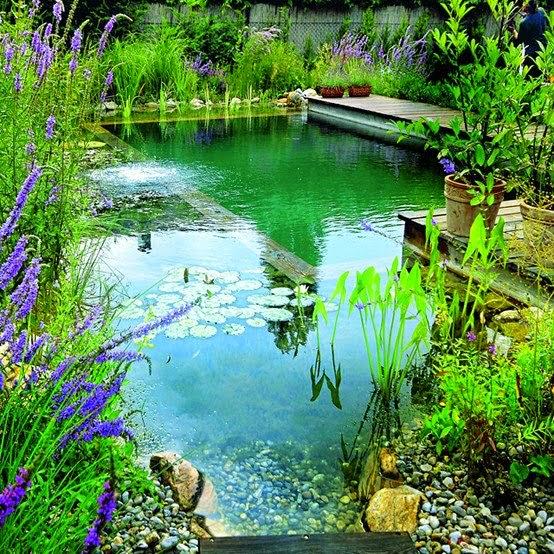 Com o clima cada vez mais quente relaxar e se refrescar for Piscinas biologicas