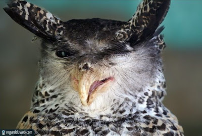 Photos marrantes et surprenantes Animal - Oiseau v51