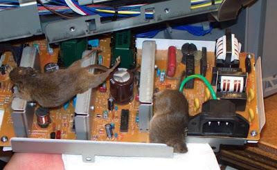 Coisas repugnantes encontradas dentro PCs
