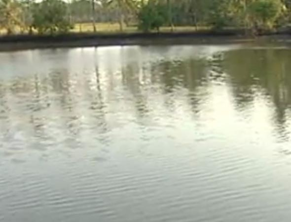 Create and develop successful businesses through farm for Fish farming ponds