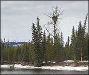 Houston B.C. Eagles Nest Morice River
