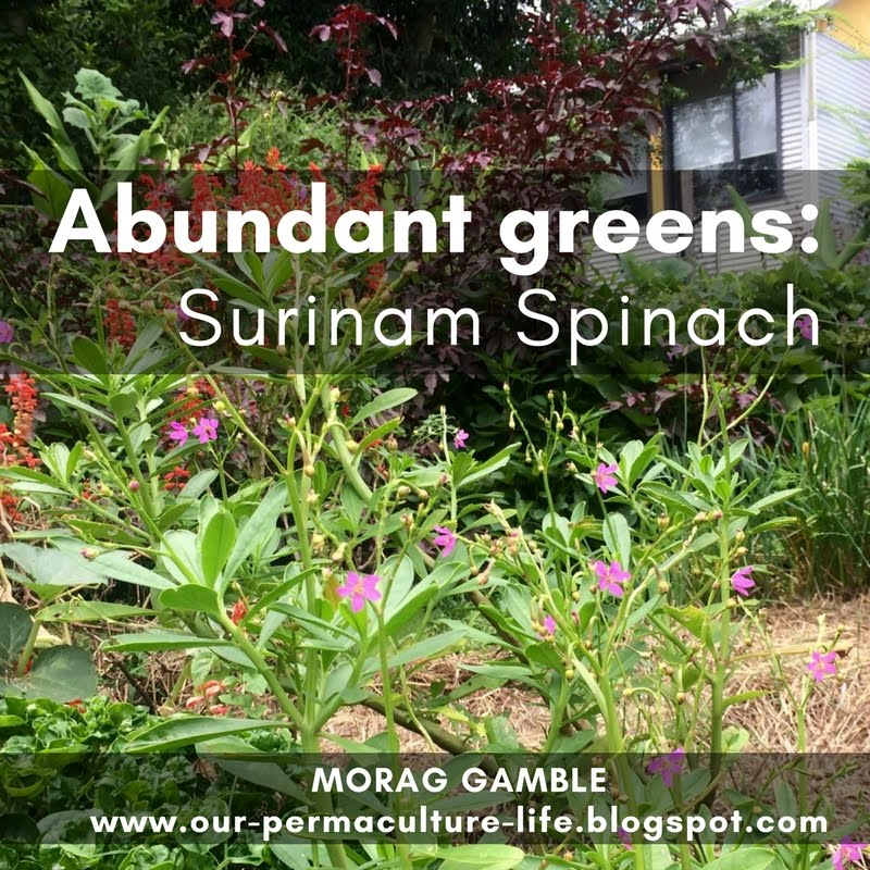 how to cook surinam spinach