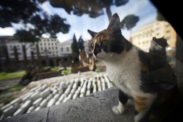 Археологи решили потеснить приют для кошек в центре Рима