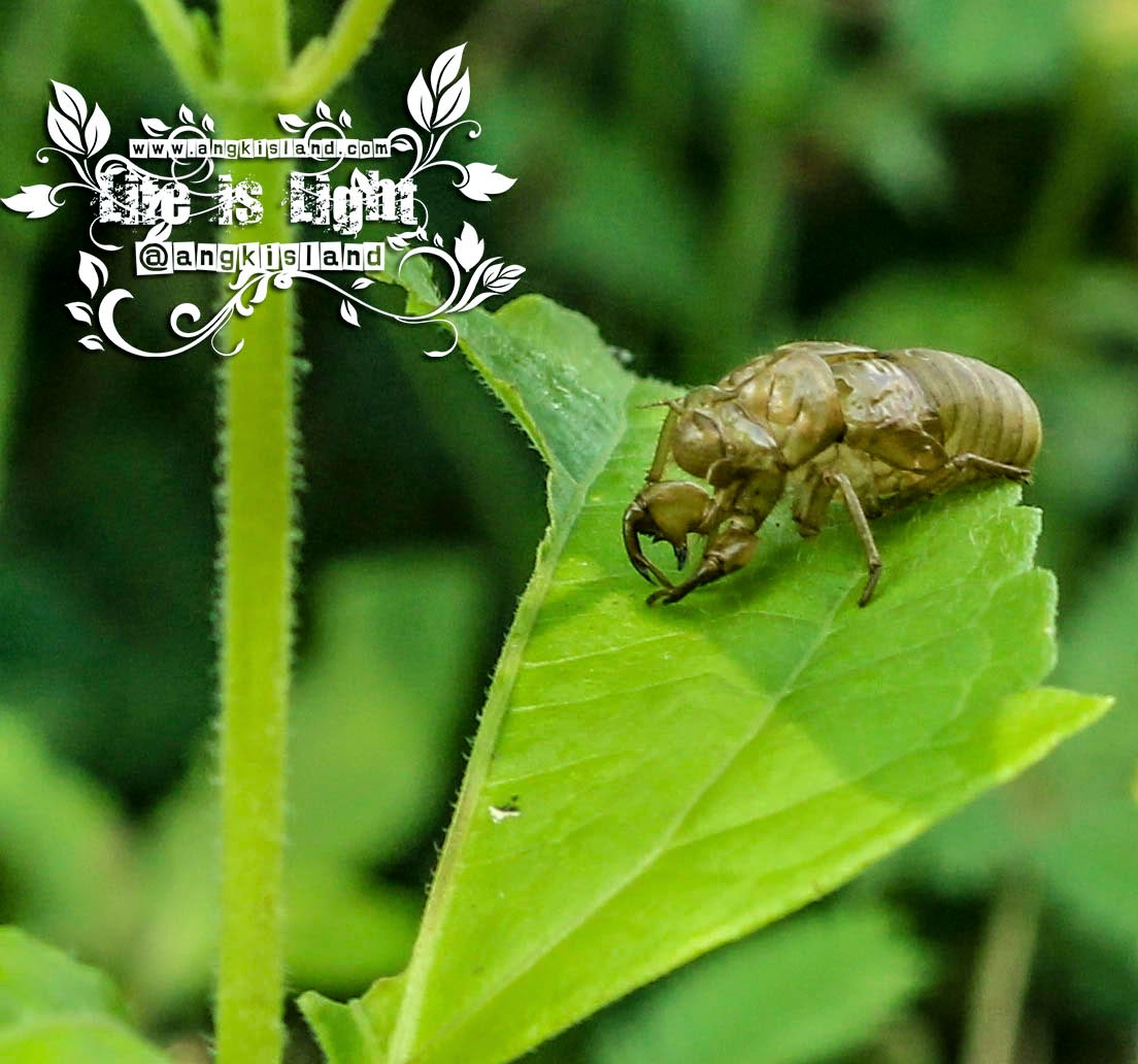 kulit cangkang serangga