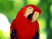 #2 Parakeet Wallpaper