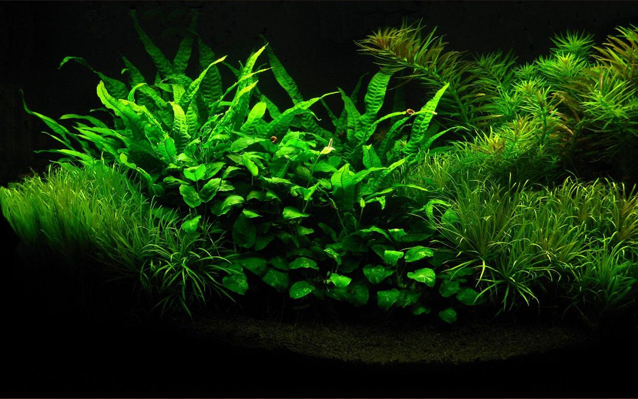 free online aquarium games
