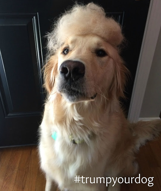 dog with donald trump comb over hair do trump your dog