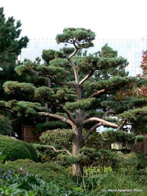 Havre aplemont photo 10 ans for Jardin japonais le havre