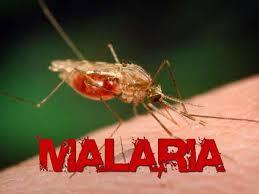 Malaria, Malaria  protein, cancer