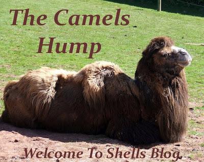 The Camels Hump