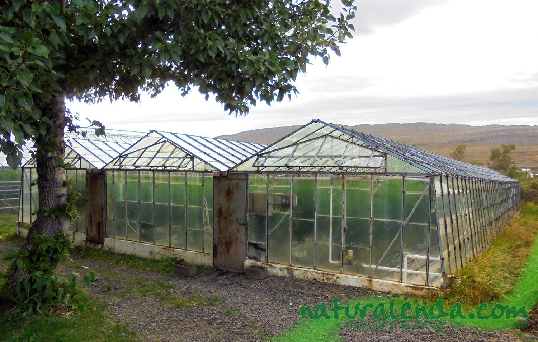 La naturaleza en casa invernadero de tomates en islandia - Invernadero para casa ...