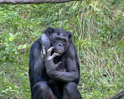 Chimp Finger