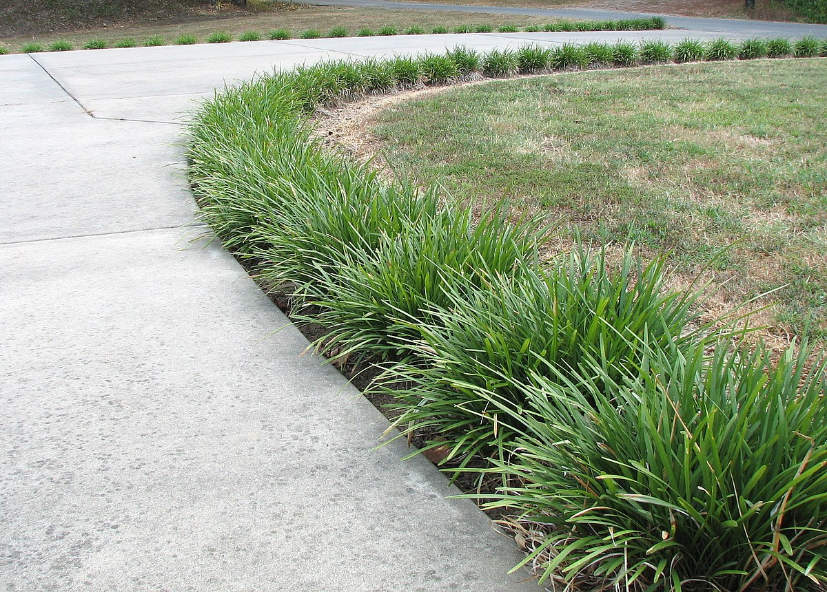 My environmental science blog for Grass looking shrubs