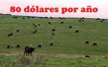 Renta agrícola-ganadera