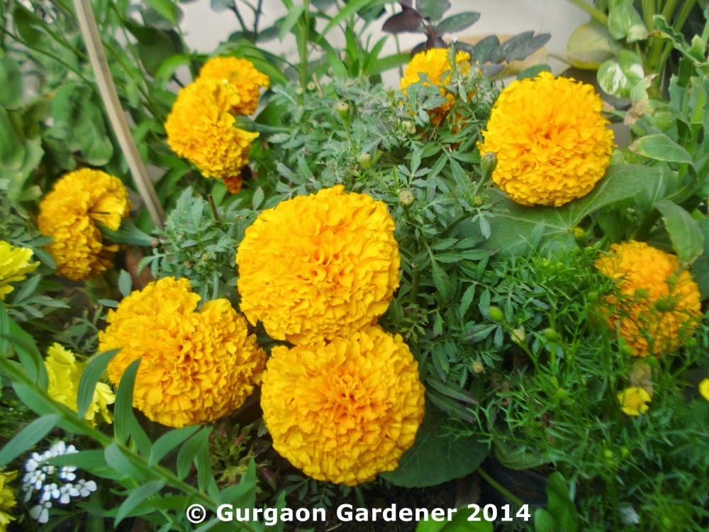 Gurgaon gardener for Soil gurgaon