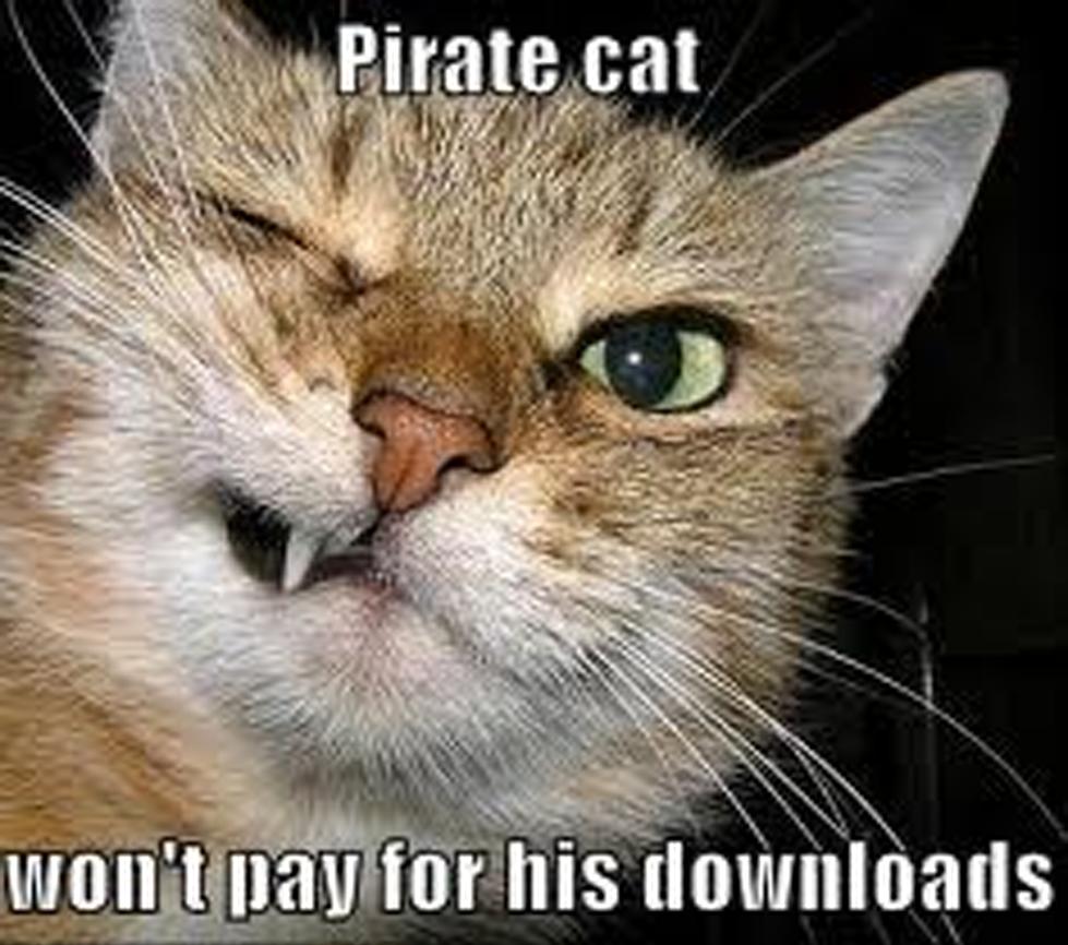 Pirate-Cat-Meme