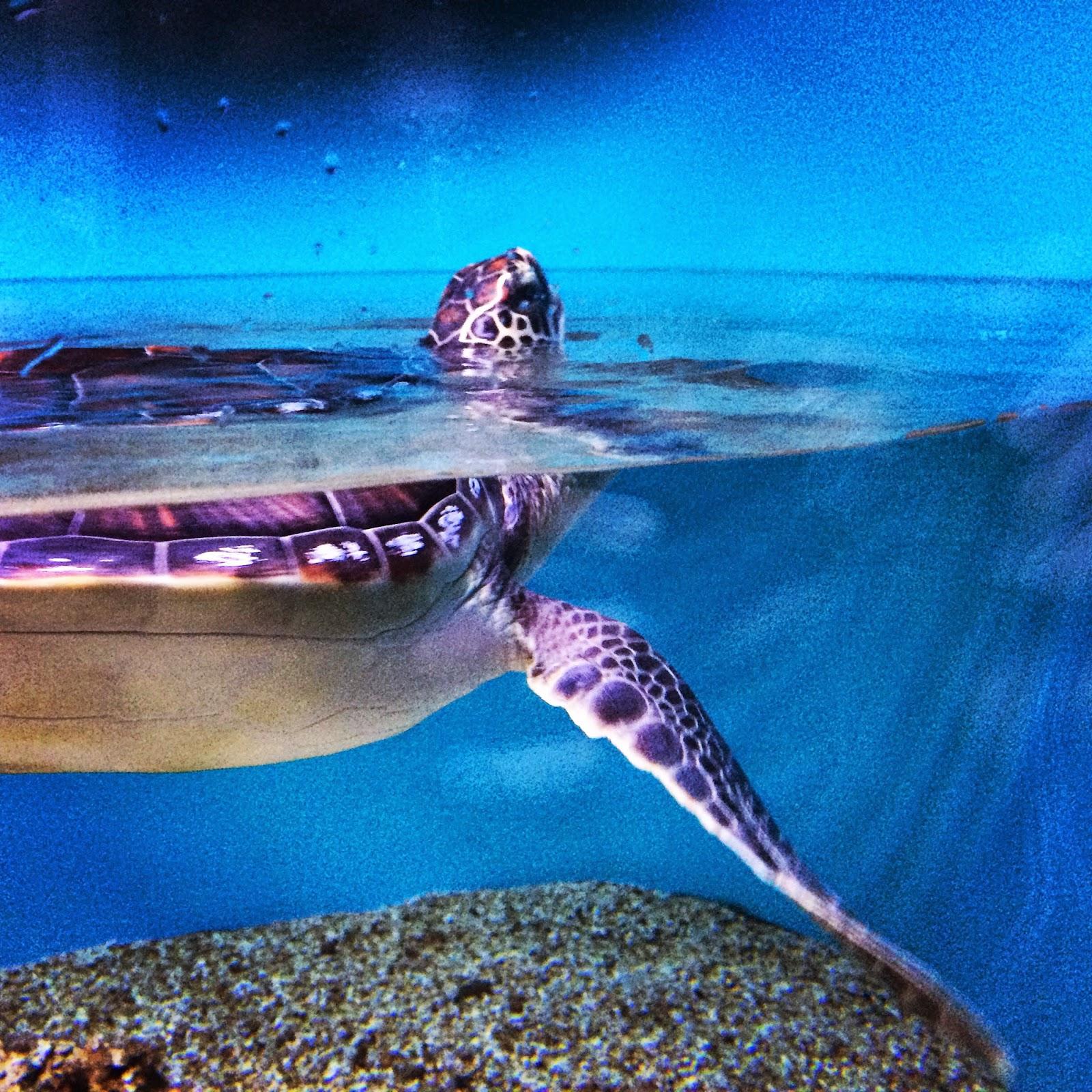 Sea Turtle Waikiki Aquarium
