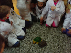 Conociendo las tortugas