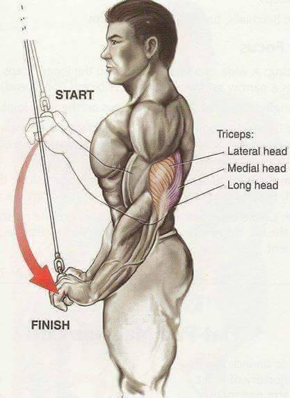 triceps-exercise-steps