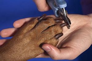 Mascotas, Cuidados