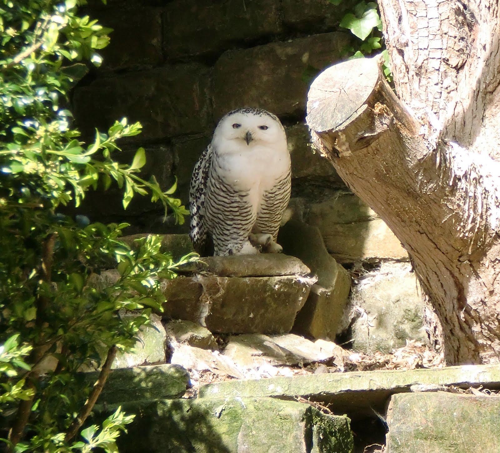 Harewood House bird garden | 1+1=3